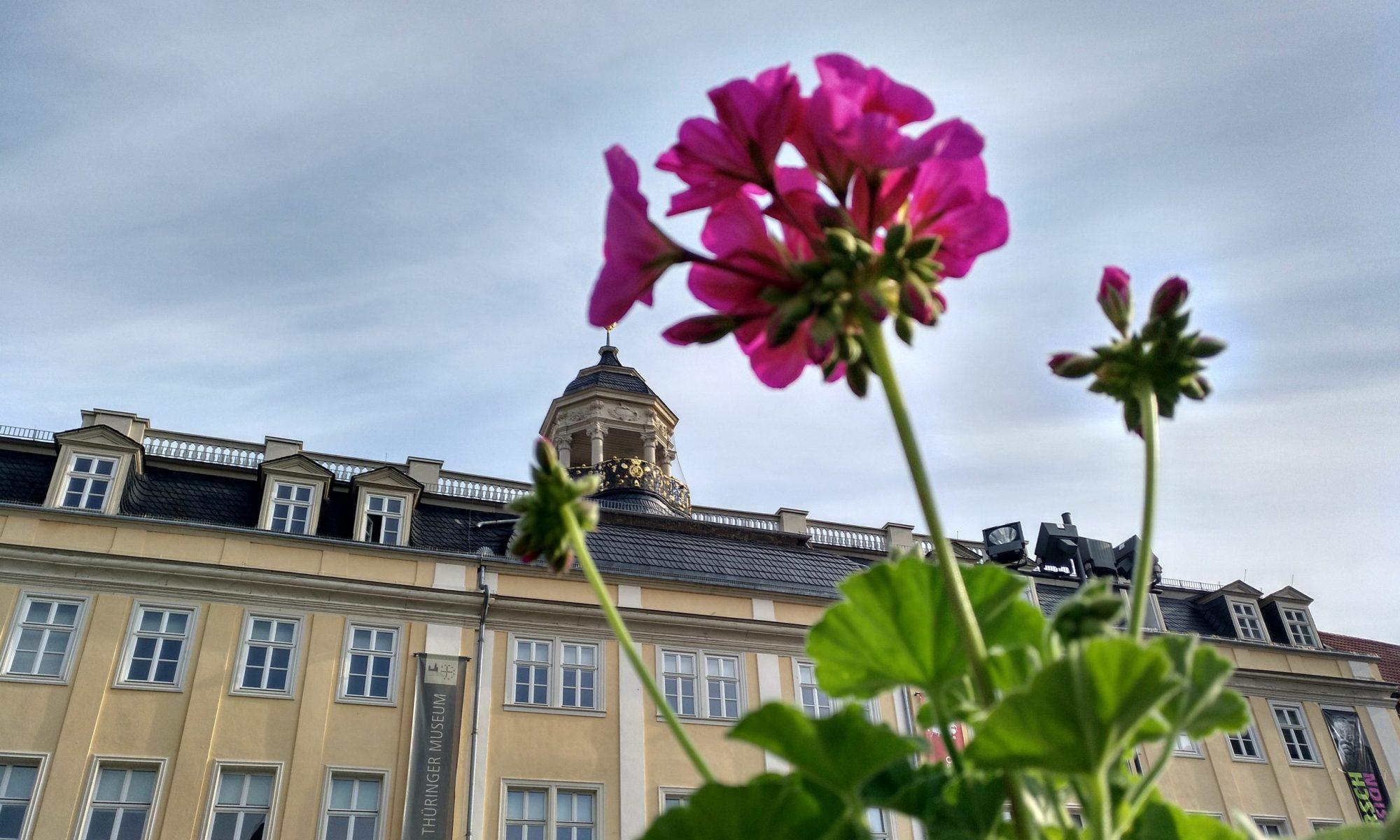Die Gärtnerei Maurer in Eisenach