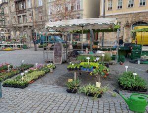 Zu Beginn im April noch mit kleinerem Angebot: Marktstand der Gärtnerei Maurer in Eisenach